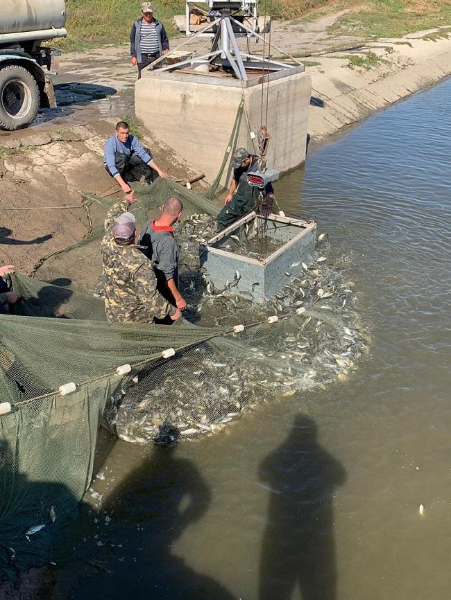 В озеро Кагул выпустят 2,5 млн. экз. ценных видов рыб