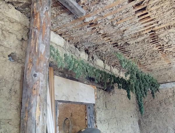 В Болградском районе пограничники выявили конопляную ферму. ФОТО. ВИДЕО