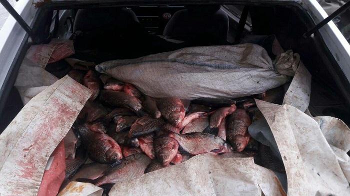 В январе изъято 563 кг рыбы и 121 запрещенное орудие лова - Одесский рыбоохранный патруль