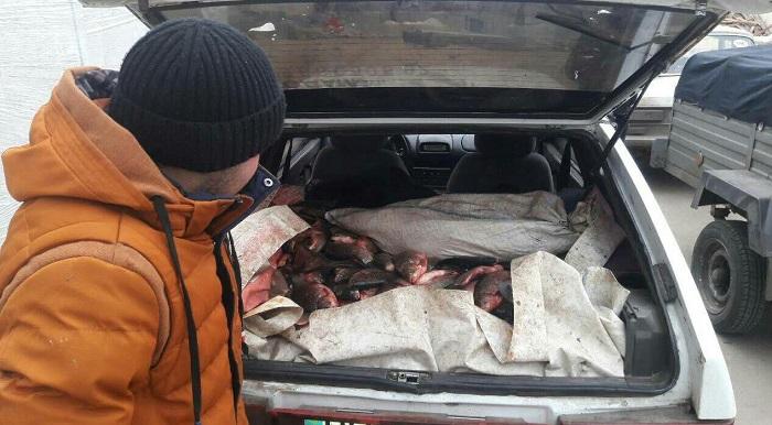 рыба у браконьеров