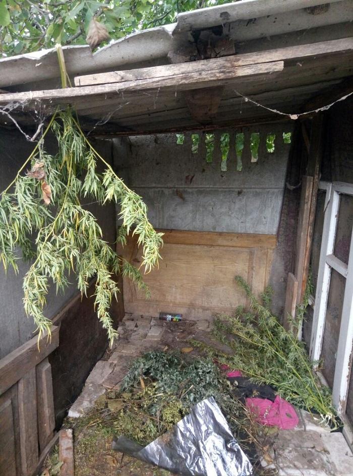 В Измаиле вооруженная пенсионерка выращивала коноплю
