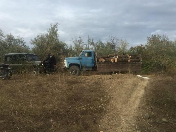 Измаильские пограничники пресекли незаконную вырубку леса