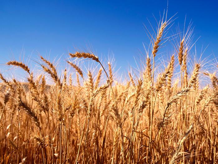 Измаильский район собрал урожай
