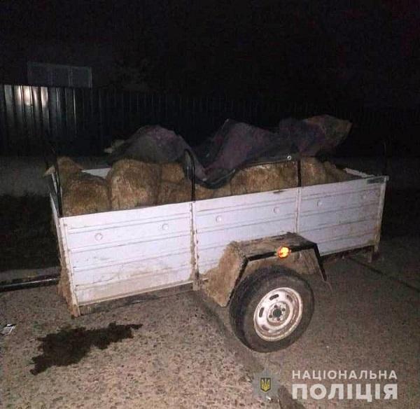 В Измаильском районе разоблачены овцекрады. ФОТО