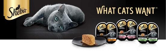 Здоровый сбалансированный корм для кошек — каким он должен быть?