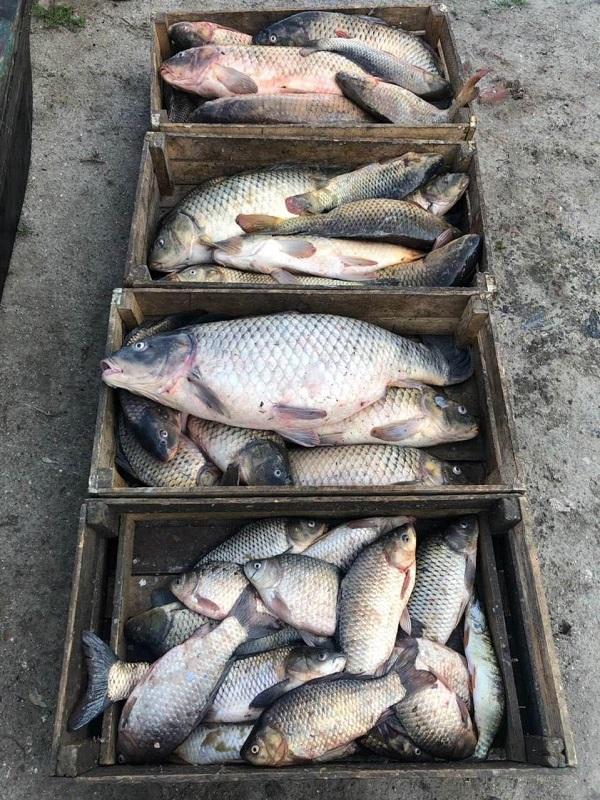 На озере Кугурлуй браконьеры электроудочкой выловили 83 кг рыбы