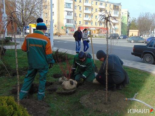В Измаиле продолжается озеленение