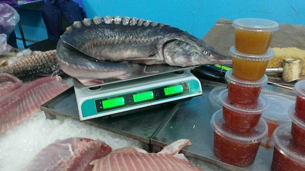 В феврале выявлено 250 правонарушений с убытками почти 39 тыс. грн, - Одесский рыбоохранный патруль