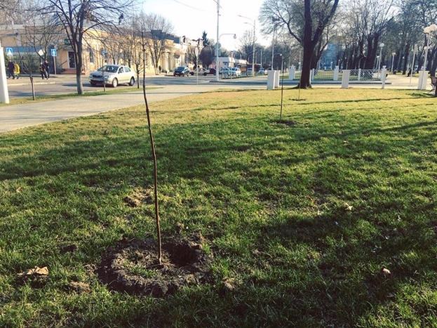 В Измаиле стартовала масштабная весенняя высадка деревьев
