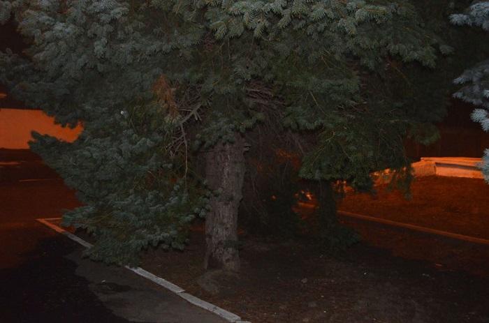 В Измаиле на главной площади города изуродовали голубую ель. ФОТО