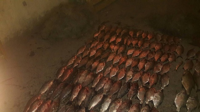Пограничники на озере Кагул обнаружили полкилометра браконьерских сетей с рыбой