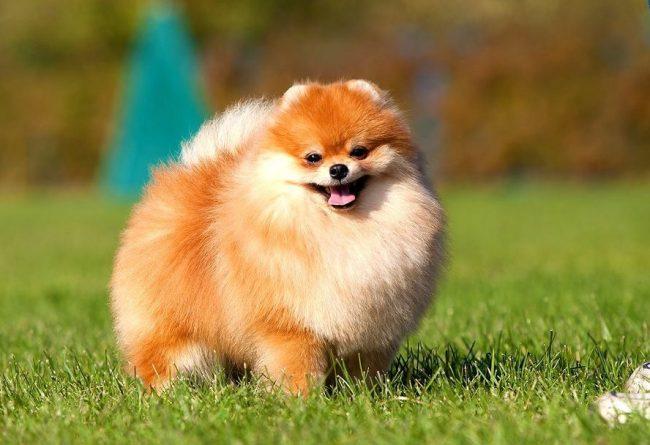 средство от блох и клещей для собак