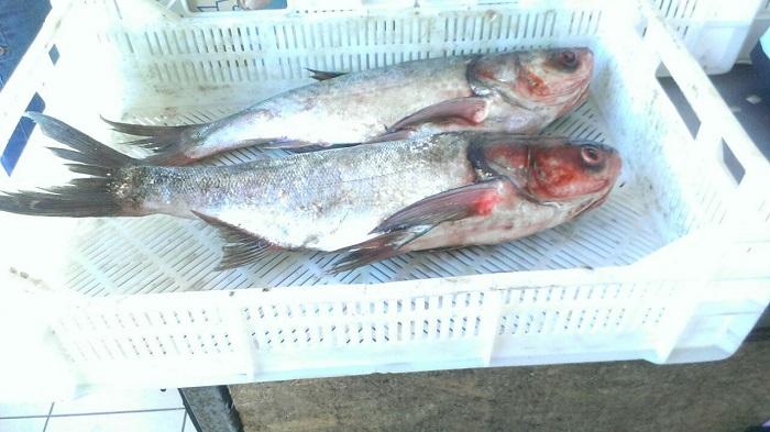 Рыбоохранный патруль изымает незаконный улов на рынках. ФОТО