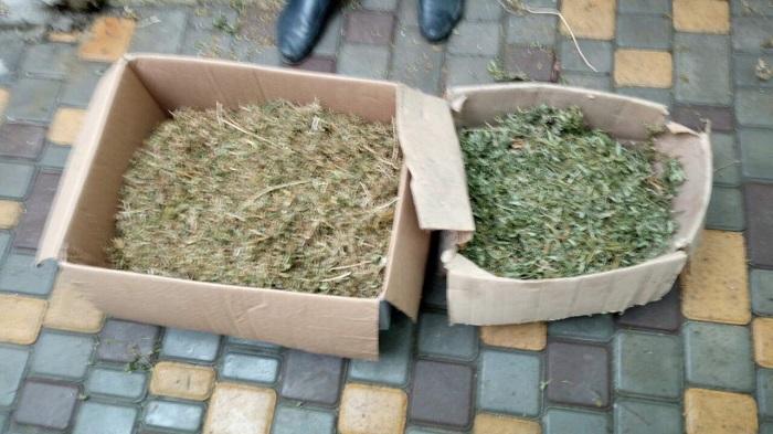 Измаильские полицейские изъяли урожай конопли. ФОТО