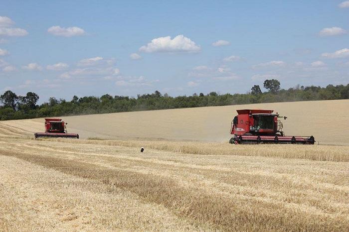 О ходе уборки ранних зерновых и зернобобовых культур урожая 2017 в Измаильском районе