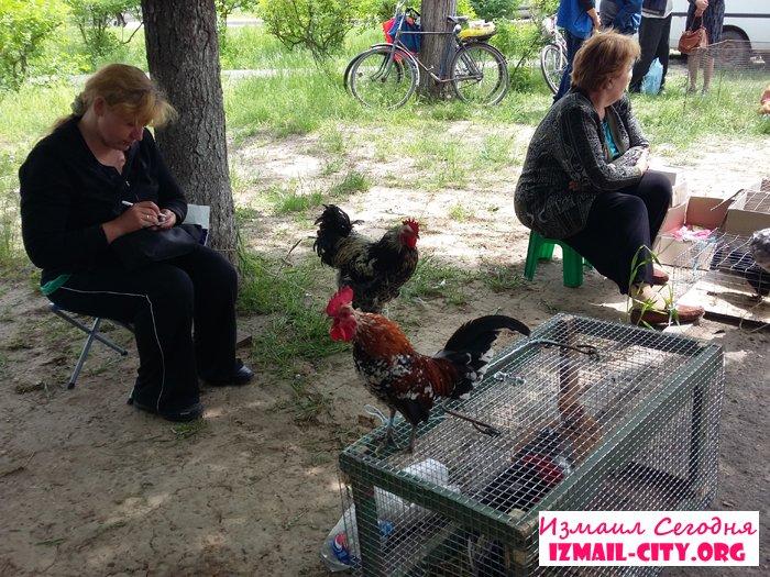 Выставка-ярмарка домашних животных