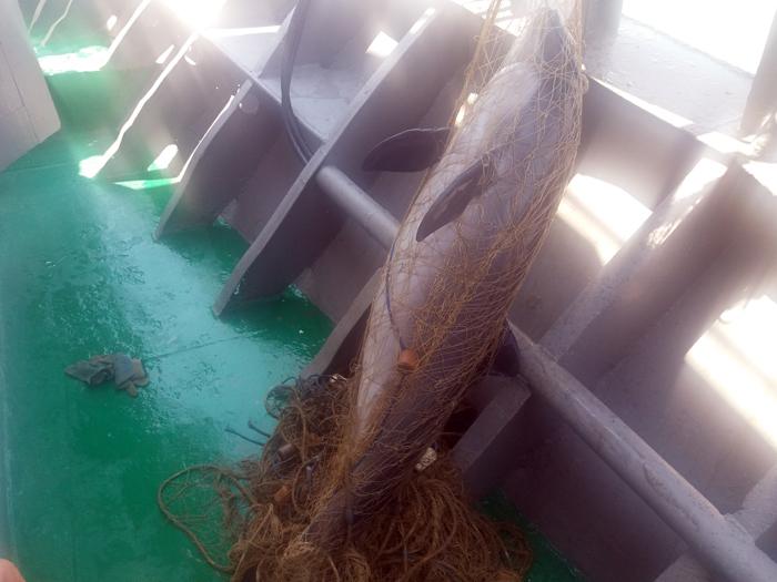 мертвые дельфины Черное море
