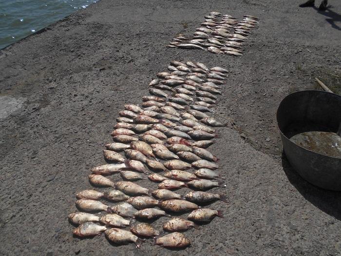 В Измаиле изобличен рыбак-браконьер