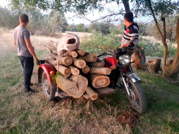 Пограничники Измаильского отряда задержали лиц, незаконно вырубающих софору