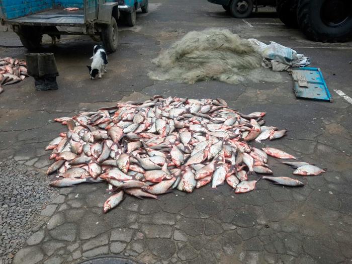 Пограничники Измаильского отряда задержали браконьеров с более полутонной рыбы и орудиями лова