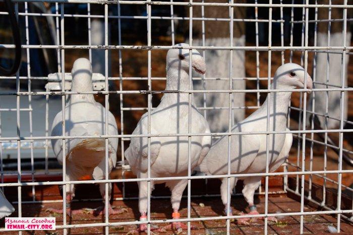В Измаиле состоялась международная выставка животных и птиц