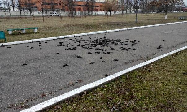 в Измаиле погибли птицы