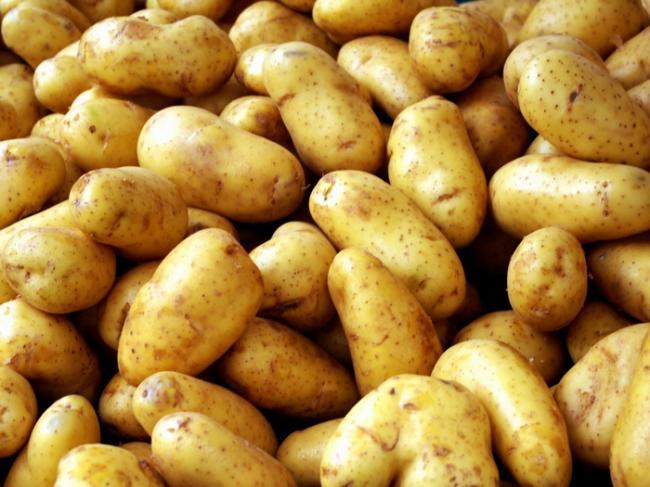семенной картофель купить