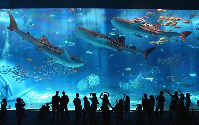 аквариум в интернет магазине