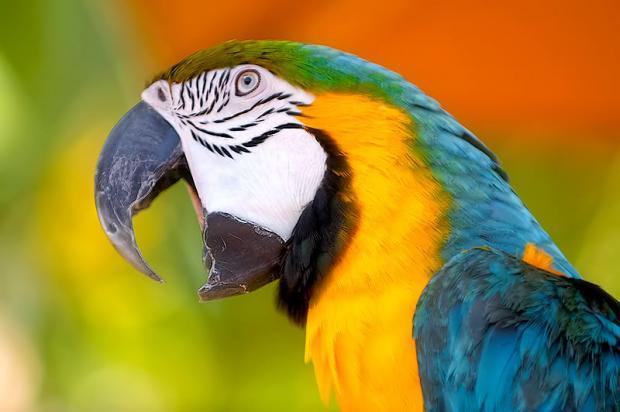 корм для птиц и попугаев