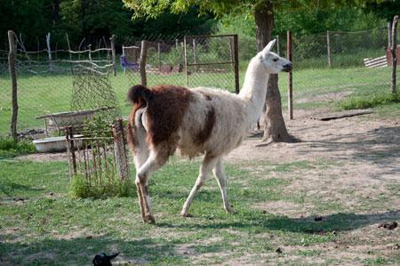 зоопарк в Измаиле